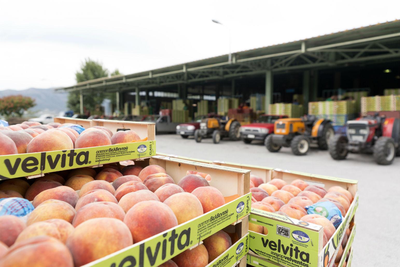 Πώς o Αγροτικός Συνεταιρισμός Βελβεντού έγινε στρατηγικός συνεργάτης της Lidl