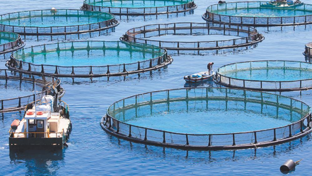 Νηρέας – Σελόντα: Η επόμενη ημέρα μετά την εξαγορά από την Andromeda Seafoods