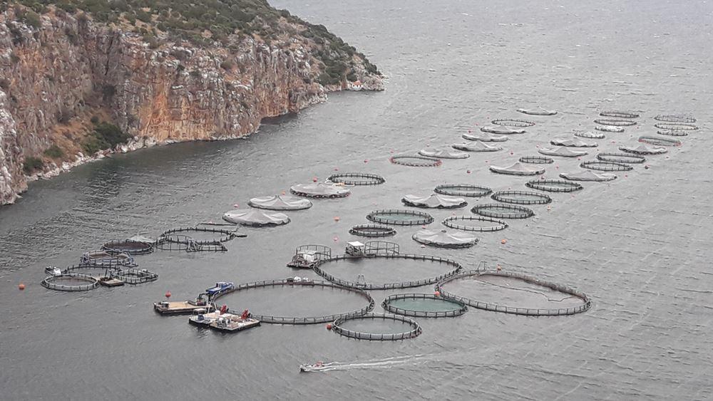 Δούρειος Ίππος η Ελλάδα για τα τούρκικα ψάρια ιχθυοκαλλιέργειας