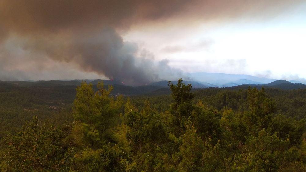 Επικεφαλής της WWF αποδομεί όσα ακούγονται για τις φωτιές στην Εύβοια και τις ανεμογεννήτριες