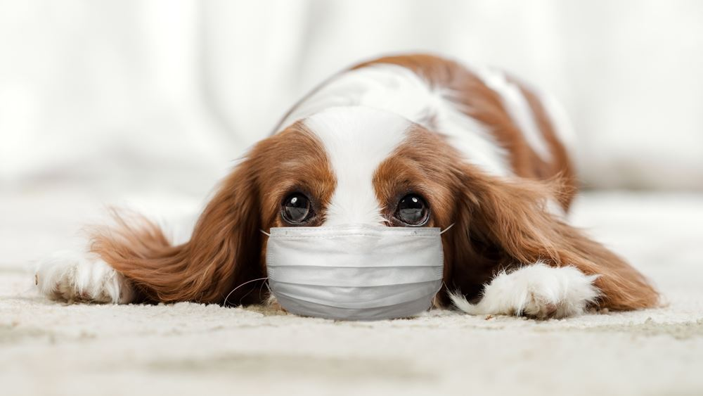 Βρέθηκε νέο είδος κορονοϊού σε ασθενείς και προέρχεται... από σκύλους