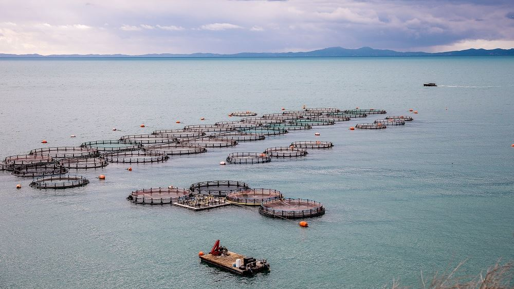 Γιατί πωλούνται με ζημιά τα ελληνικά ψάρια στην Ιταλία