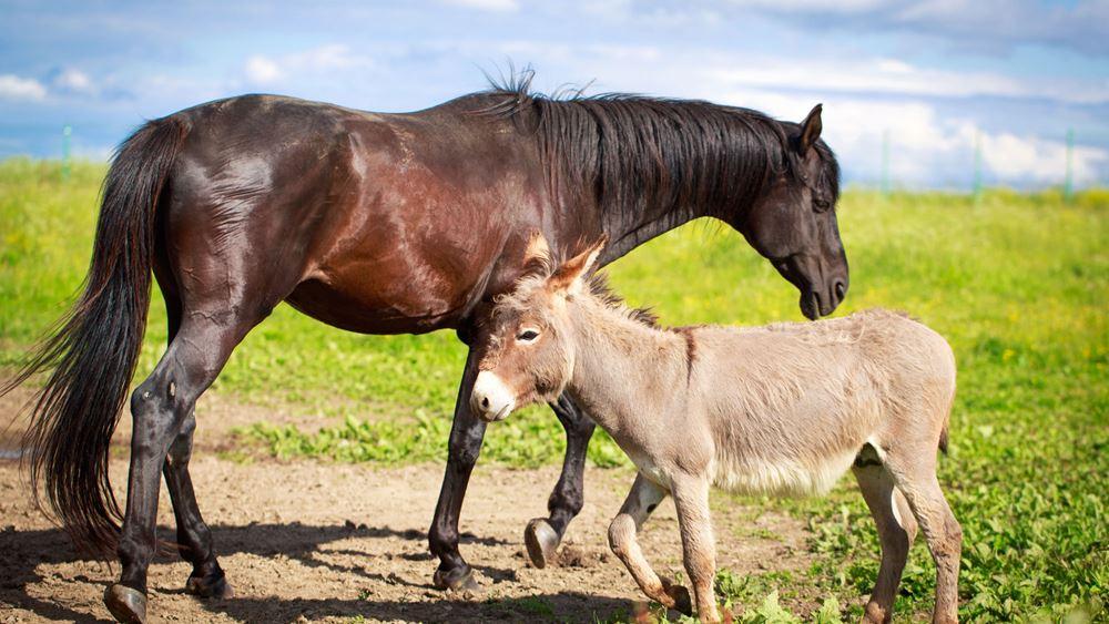 Η Τουρκία θα εισάγει 500 τόνους κρέας αλόγου και γαϊδουριού από το Σουδάν