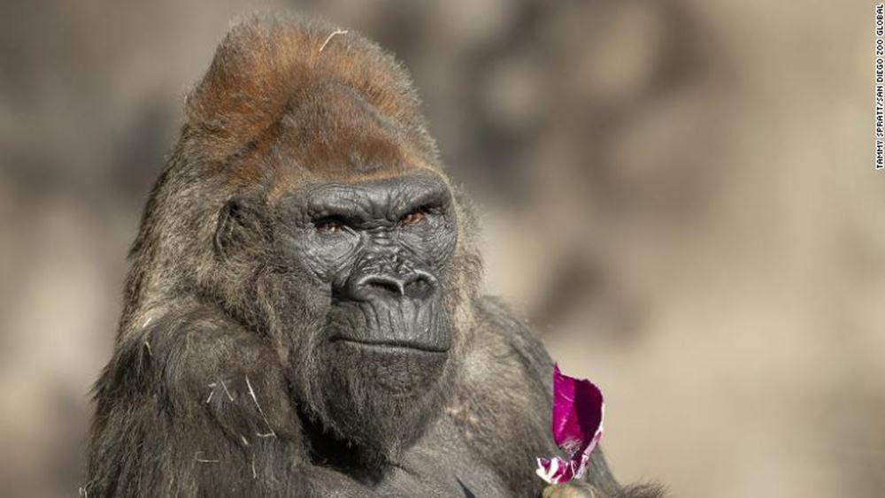 ΗΠΑ: Μεγάλοι πίθηκοι του ζωολογικού κήπου του Σαν Ντιέγκο εμβολιάσθηκαν κατά του κορονοϊού