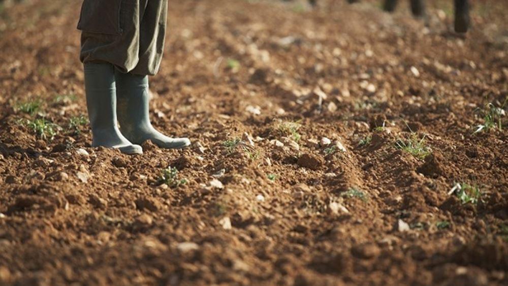 ΕΛΣΤΑΤ: Άνοδος 3,5% του δείκτη τιμών εκροών στη γεωργία-κτηνοτροφία