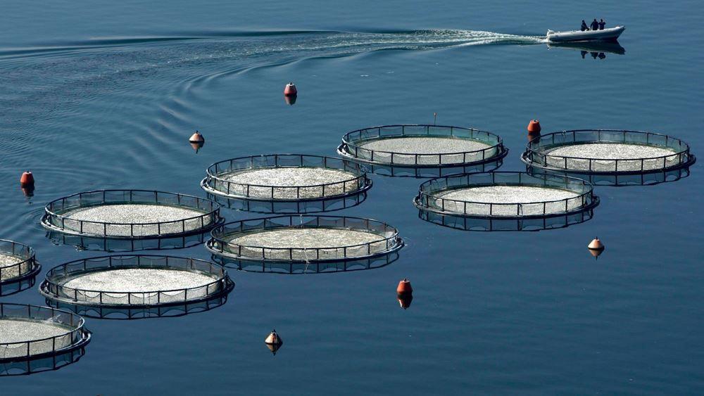 Βυθίζονται οι τιμές των ελληνικών ψαριών