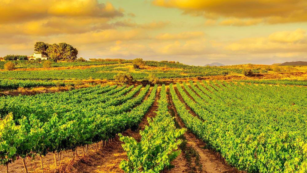 ΕΛΣΤΑΤ: Άνοδος 14,3% του δείκτη τιμών εκροών στη γεωργία-κτηνοτροφία τον Ιούλιο