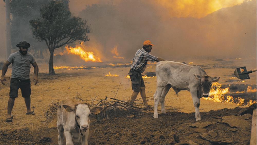 Πώς η κλιματική κρίση έβαλε φωτιά στη γειτονιά μας
