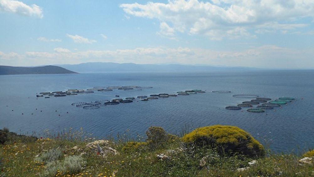 Στην Ελλάδα οι πρώτες πιστοποιημένες φάρμες καλλιέργειας τσιπούρας-λαβρακίου στην Ευρώπη