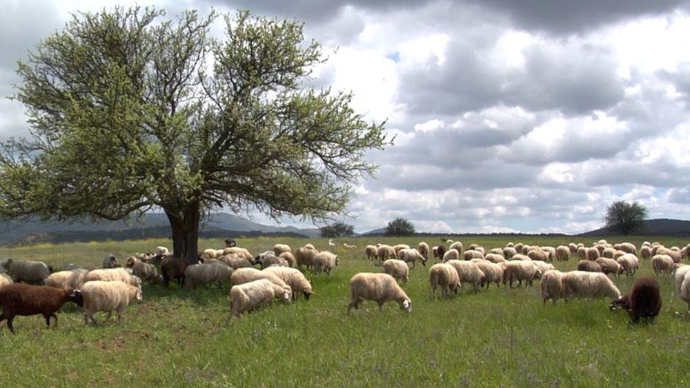 Υπ. Αγροτικής Ανάπτυξης: Σχέδιο αξιοποίησης όλων των μόνιμων βοσκοτόπων για τη στήριξη της κτηνοτροφίας
