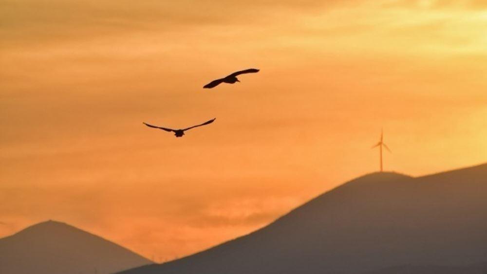 ΟΗΕ: Αμείωτος ο ρυθμός απώλειας της βιοποικιλότητας