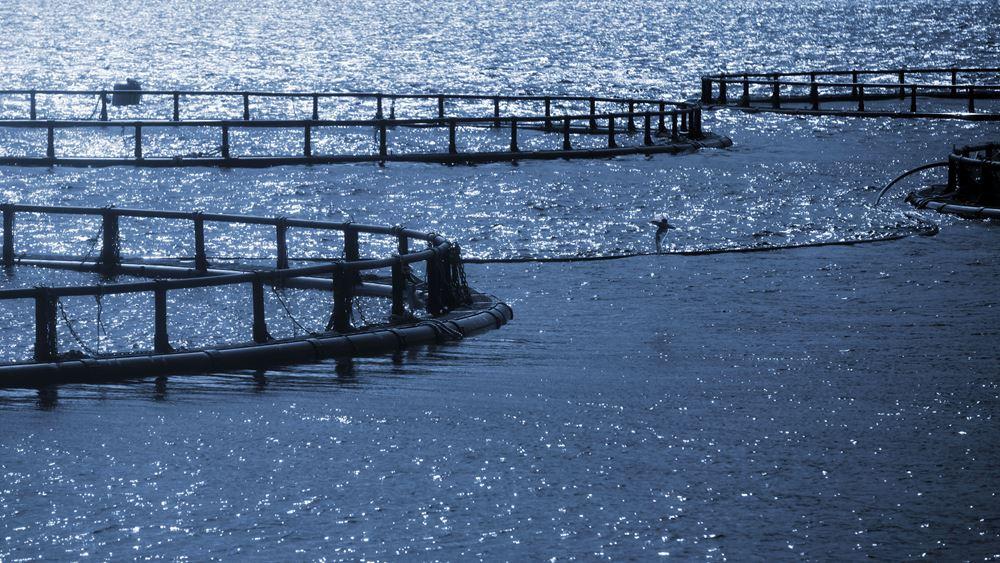ΕΛΣΤΑΤ: Μειώθηκε η παραγωγή εκτρεφόμενων - καλλιεργούμενων ειδών υδατοκαλλιέργειας το 2019