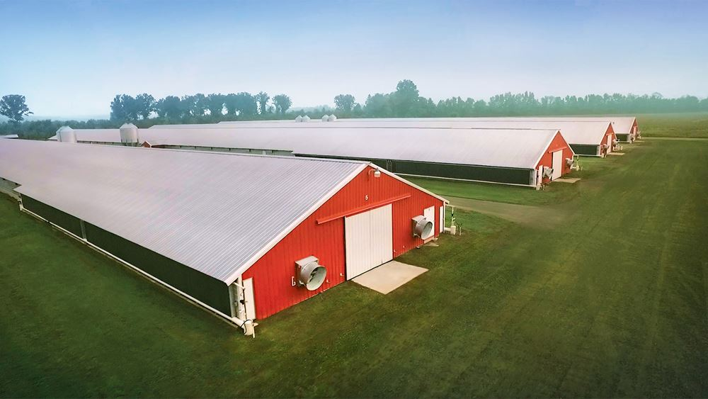 Sanderson Farms: Ζημιές 17,8 εκατ. δολαρίων στο τρίμηνο