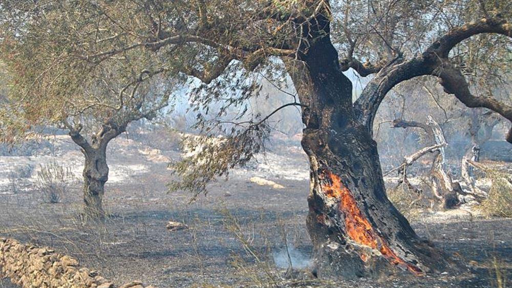 Ζάκυνθος: Υπό έλεγχο πυρκαγιά στο χωριό Λιθακιά