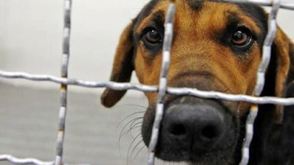 Το αδίκημα βασανισμού των ζώων μετατρέπεται σε κακούργημα