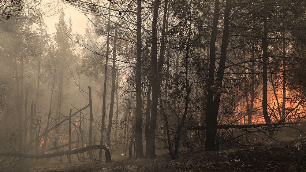 Ευθ. Λέκκας: Από τα 500.000 στρέμματα που κάηκαν, τα 300.000 καταστράφηκαν ολοσχερώς