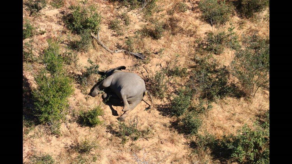 Μυστήριο με εκατοντάδες νεκρούς ελέφαντες στη νότια Αφρική