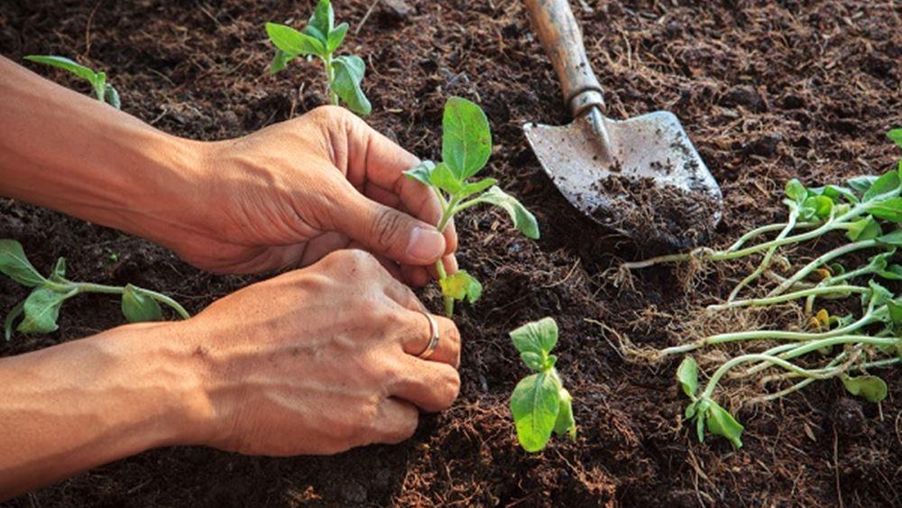 ΕΛΣΤΑΤ: Πτώση 2,1% του δείκτη τιμών εκροών στη γεωργία-κτηνοτροφία