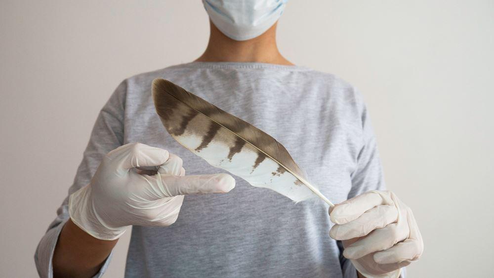 Κίνα: Η πρώτη μόλυνση σε άνθρωπο από το στέλεχος Η10Ν3 της γρίπης των πτηνών