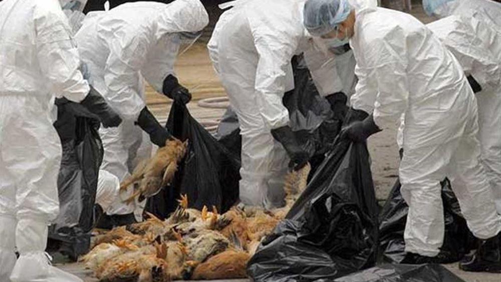 Κίνα: Οι τελωνειακές αρχές βρήκαν ίχνη κορονοϊού σε συσκευασίες πουλερικών από τη Ρωσία