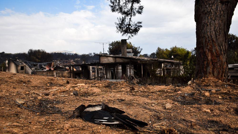 Ξεπέρασαν τους 200 βαθμούς οι θερμοκρασίες στην πυρκαγιά στο Μάτι