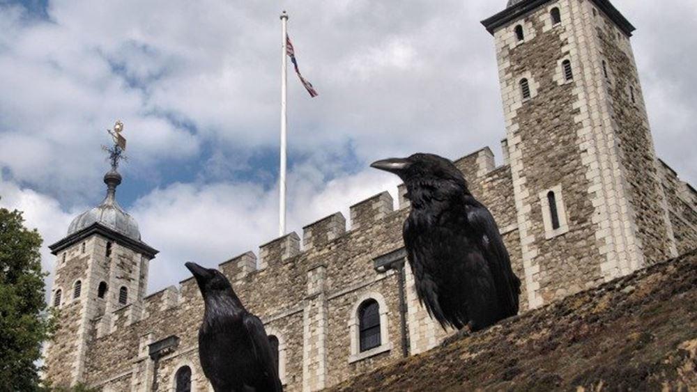 Βρετανία: Τέσσερα... κοράκια έσωσαν το βασίλειο