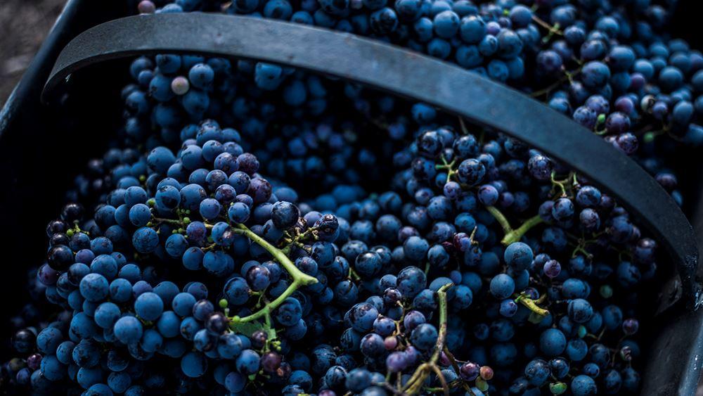"Grape Escape: Ο νέος ""προορισμός""για τους λάτρεις του ελληνικού κρασιού"