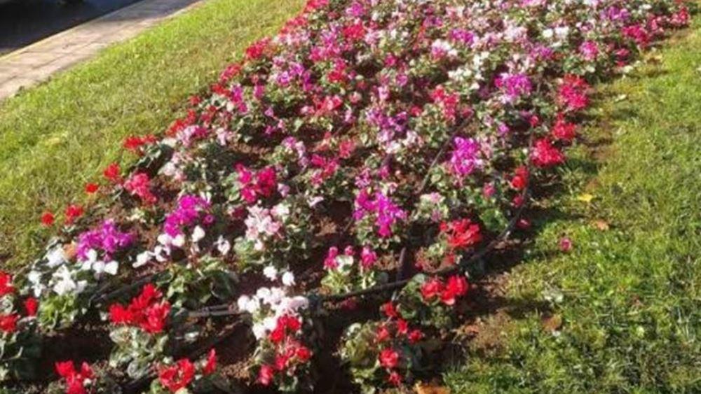 Κ. Μπακογιάννης: Χρώμα σε όλη την Αθήνα με όμορφα λουλούδια και περιποιημένο πράσινο