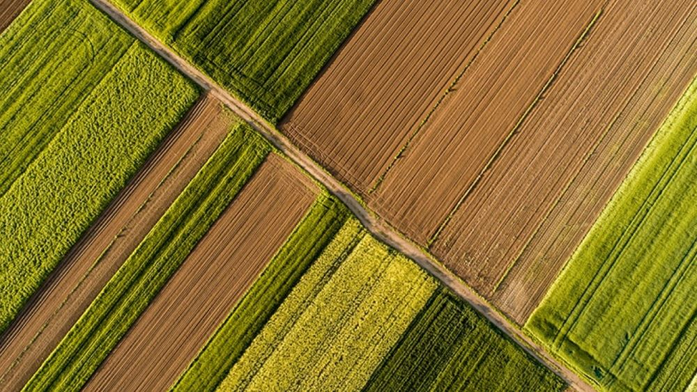 Τράπεζα Πειραιώς: Υψηλές αποδόσεις για τη διεθνή αγορά αγροτικών εμπορευμάτων το 2020