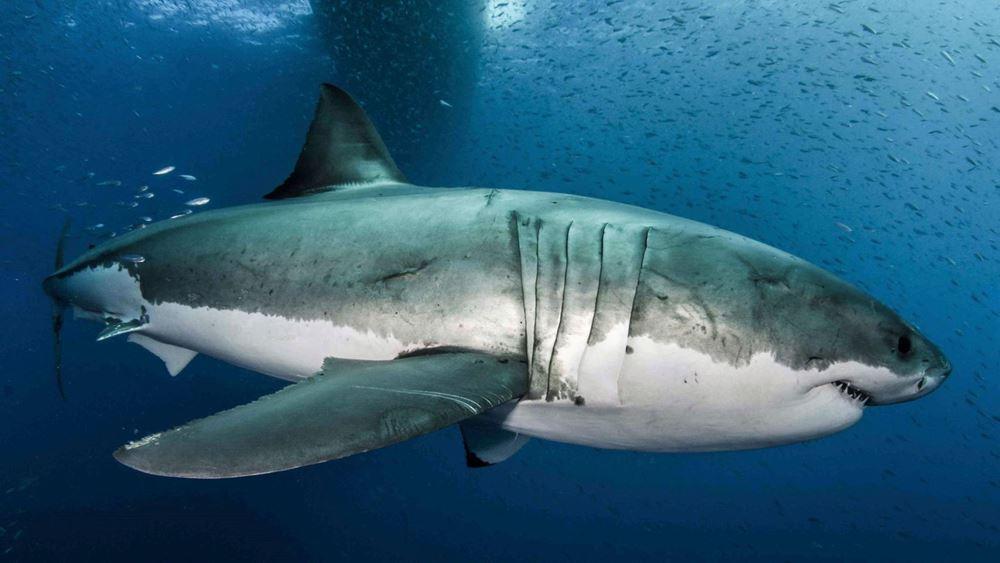 Αυστραλία: 17χρονος σέρφερ σκοτώθηκε σε επίθεση καρχαρία
