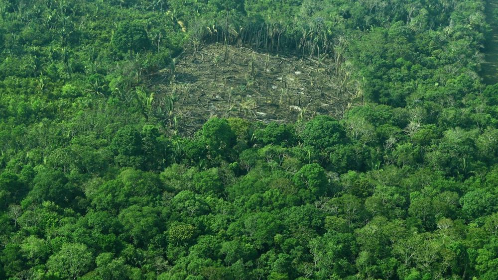 Βραζιλία: Η αποψίλωση των δασών σχεδόν τετραπλασιάστηκε τον Ιούλιο σε ετήσια βάση