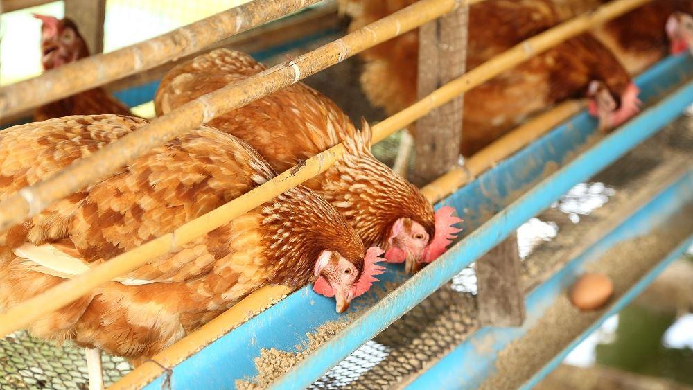 Και οι πτηνοτροφικές μονάδες στον Αναπτυξιακό με τροποποιητική ΚΥΑ
