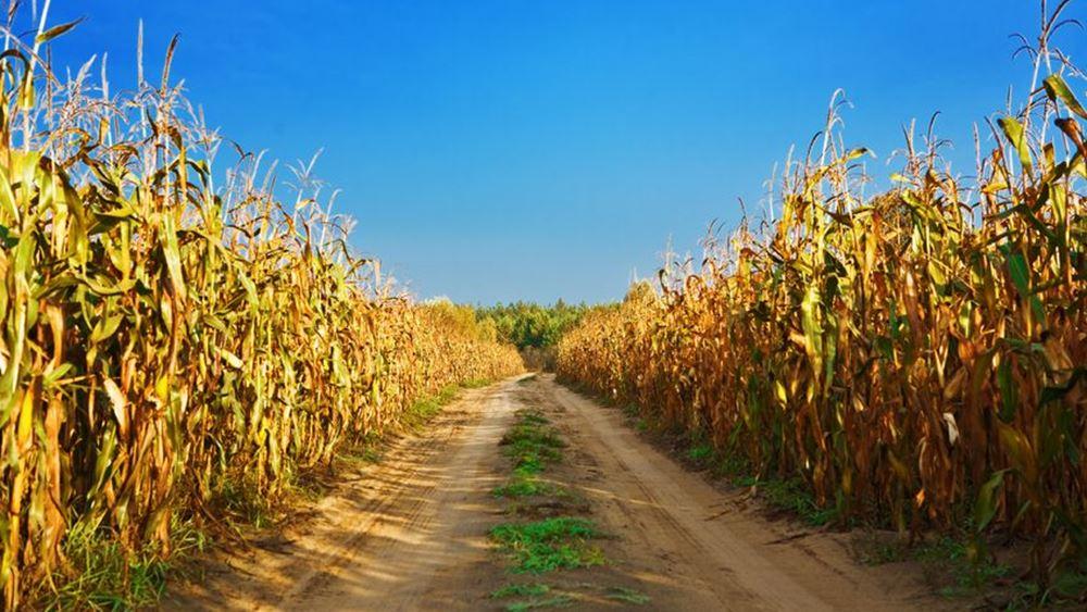 Οι τιμές του καλαμποκιού ανεβαίνουν και γι' αυτό φταίει η Κίνα