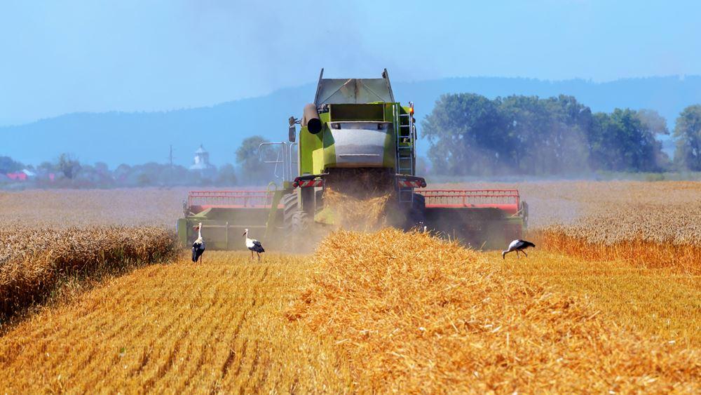 Τράπεζα Πειραιώς: Μικτές οι τάσεις στις διεθνείς αγορές αγροτικών προϊόντων