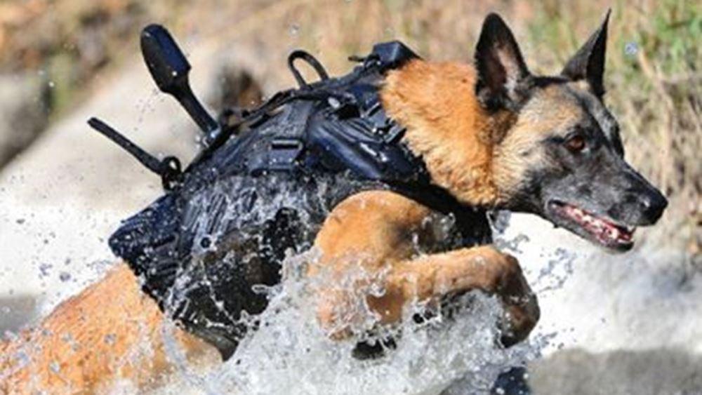 """Εντολή """"κατάταξης"""" στο Πολεμικό Ναυτικό 20 στρατιωτικών σκύλων"""
