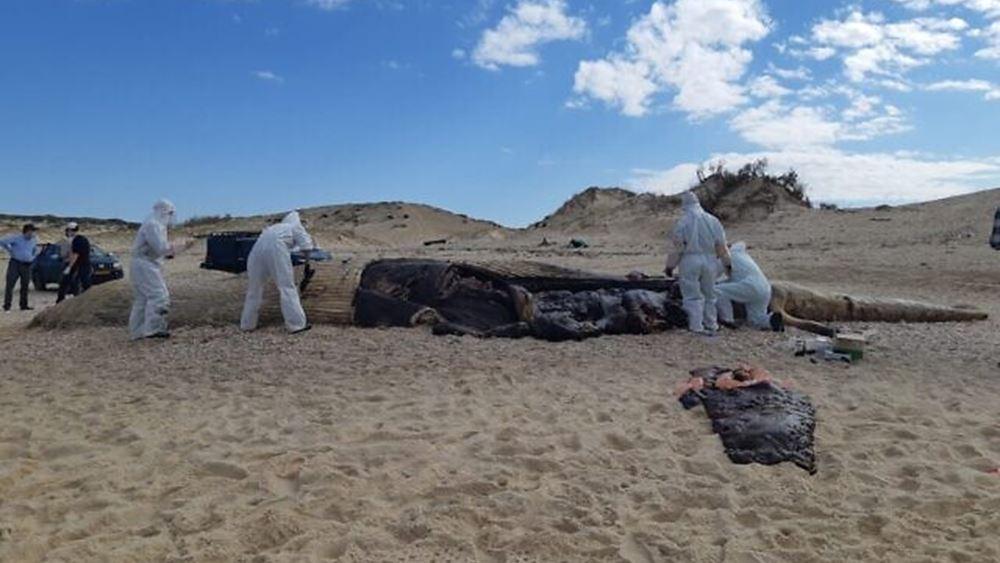 Ισραήλ: Τεράστια οικολογική καταστροφή από πετρελαιοκηλίδα στις ακτές της χώρας