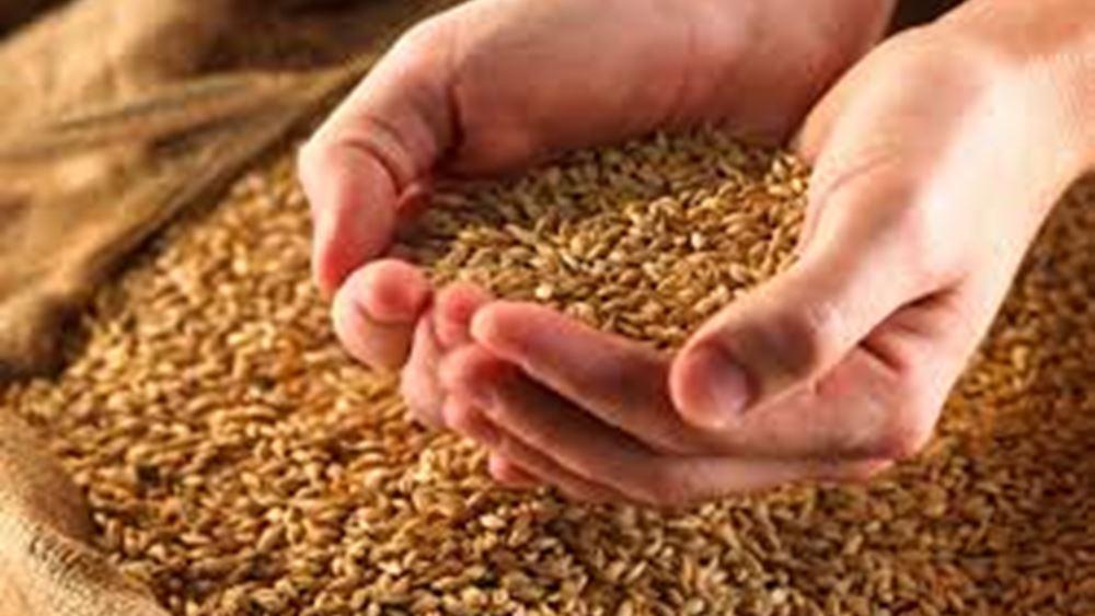 Συνεργασία RAGT και Bayer για την ανάπτυξη υβριδικών σπόρων σιταριού
