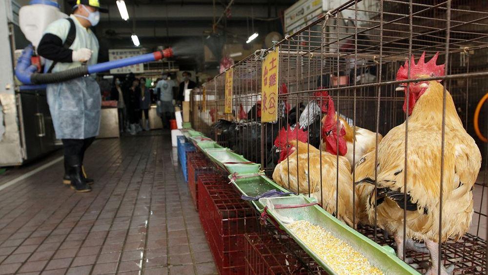 Ουγγαρία: Δεύτερο κρούσμα της γρίπης των πτηνών σε μία εβδομάδα