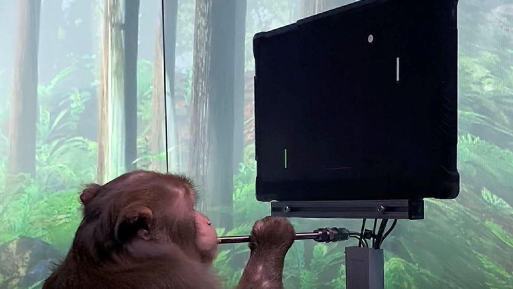Η εταιρεία Neuralink του Ι. Μασκ παρουσίασε μαϊμού με ασύρματα εγκεφαλικά τσιπάκια να παίζει βιντεοπαιγνίδι μέσω του νου της