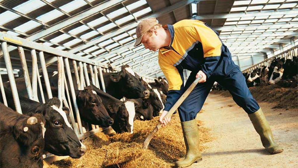 ΕΛΣΤΑΤ: Πτώση 0,8% για τον δείκτη τιμών εκροών στη γεωργία-κτηνοτροφία τον Δεκέμβριο