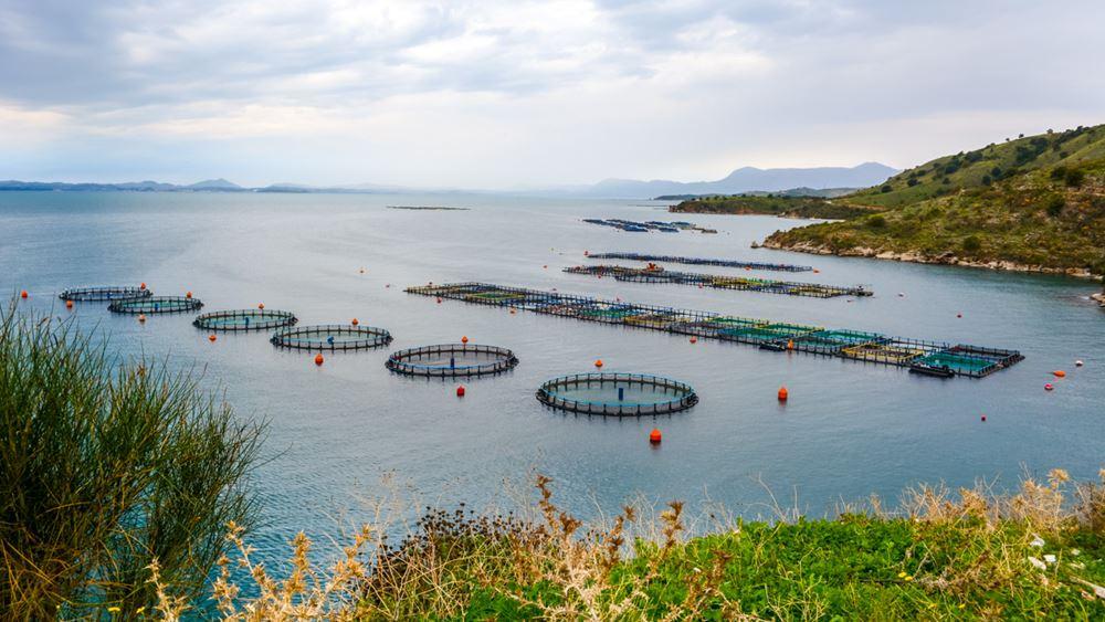Νηρεύς: Υποχρεωτική Δημόσια Πρόταση από Andromeda Seafood