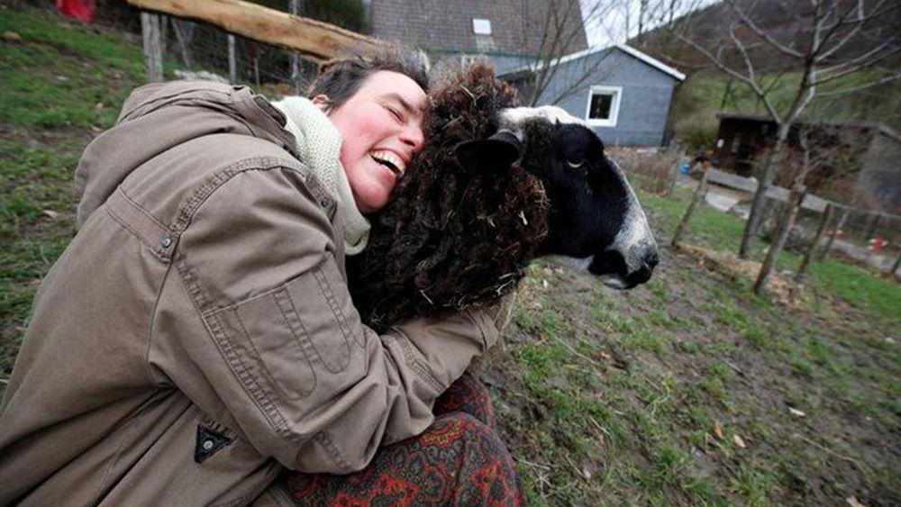 """Γερμανία: """"Αγκαλιάστε ένα πρόβατο""""-η πρόταση μιας φάρμας σε όσους αισθάνονται μοναξιά λόγω της πανδημίας"""