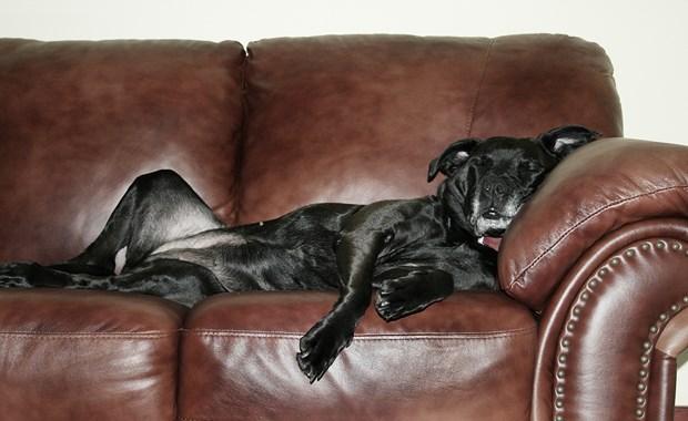 Έξι καλοί λόγοι για να σηκωθείτε από τον καναπέ
