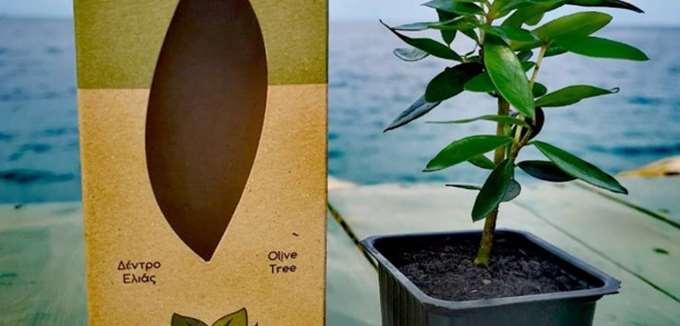 """Μια εταιρεία """"φυτεύει"""" ελιές σε όλο τον κόσμο"""