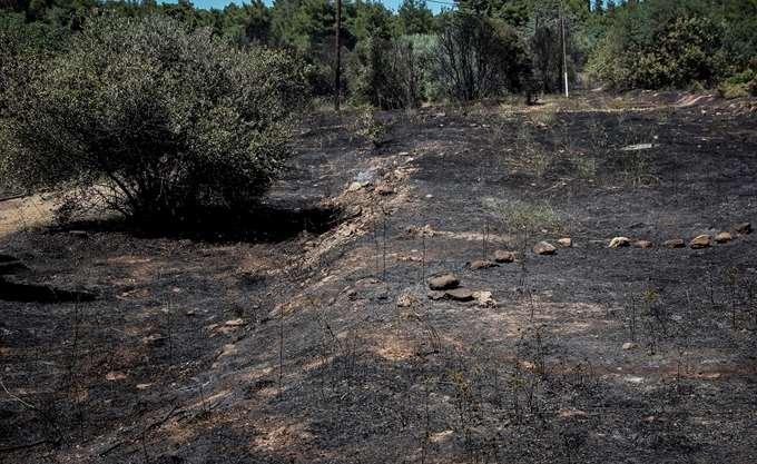 Υπό μερικό έλεγχο η φωτιά στο Κτήμα Συγγρού στο Μαρούσι