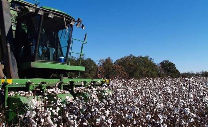 Β. Κόκκαλης: Χαράσσεται εθνική στρατηγική πενταετίας  για τη βιώσιμη ανάπτυξη του βαμβακιού