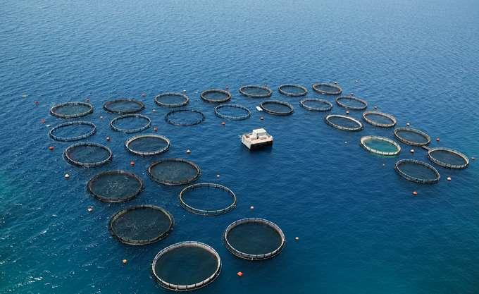 Νηρέας - Σελόντα: Ο διαγωνισμός για τις πωλήσεις μονάδων και οι ενδιαφερόμενοι