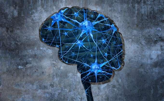 Κίνα: Επιστήμονες εμφύτευσαν ένα ανθρώπινο γονίδιο στον εγκέφαλο πιθήκων για να μελετήσουν τη νοημοσύνη στον άνθρωπο