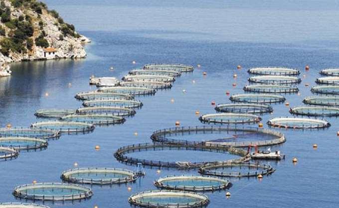 Χαμηλά 5ετίας στα ψάρια ιχθυοκαλλιέργειας