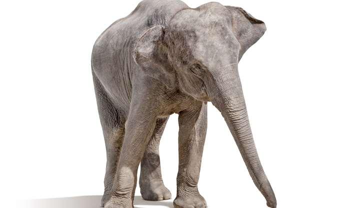 Νεκροί 87 ελέφαντες από λαθροκυνηγούς στην Μποτσουάνα